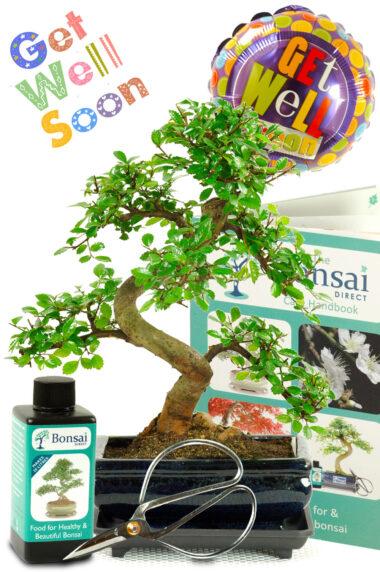 Comprehensive 'Get Well Soon' Bonsai Gift Set