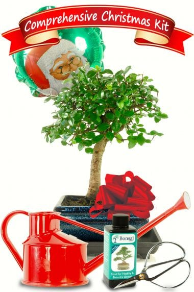 Comprehensive Christmas Baby Bonsai Kit with Watering Can