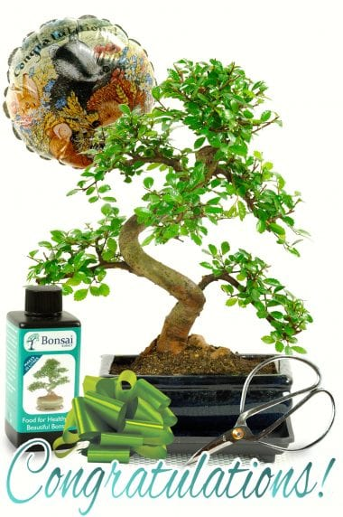 Beginners Bonsai Congratulations Kit