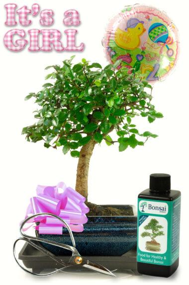 Congratulations Bonsai Gift - Baby Girl