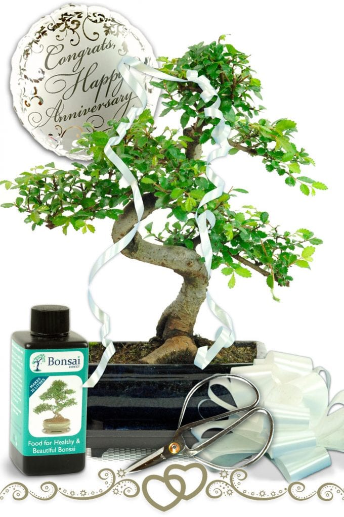 Contemporary Happy Wedding Anniversary Bonsai Gift