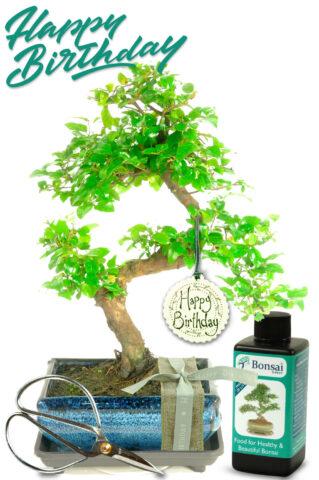 Delightful Natural Range Birthday Bonsai Gift