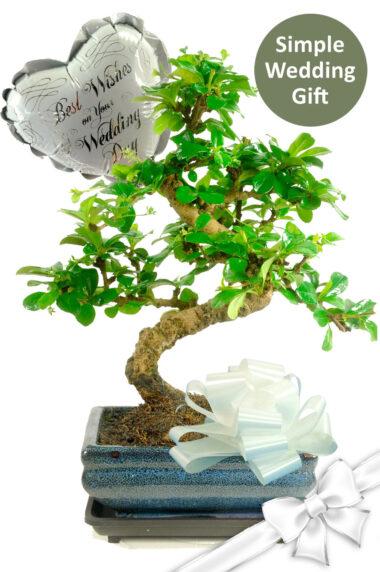 Elegant S-Shaped Flowering Bonsai Wedding Gift