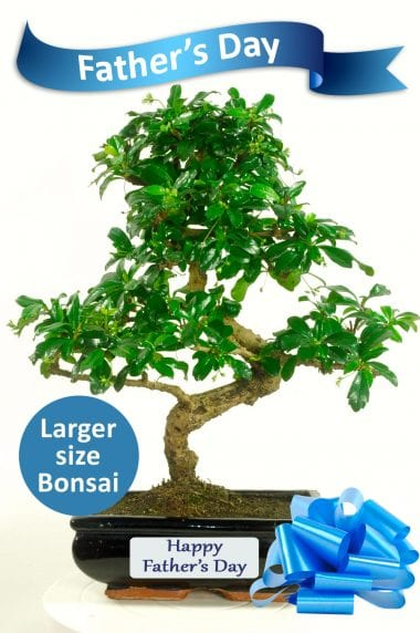 Exquisite Flowering Bonsai Father's Day Gift