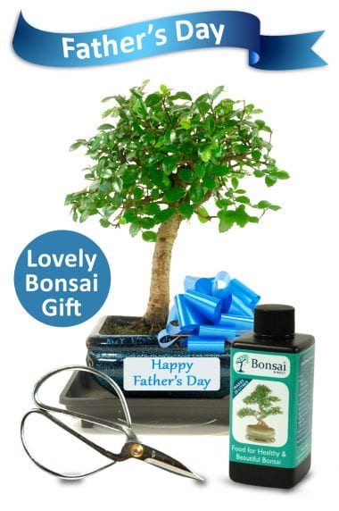 Fathers Day Beginners Baby Bonsai Gift Set