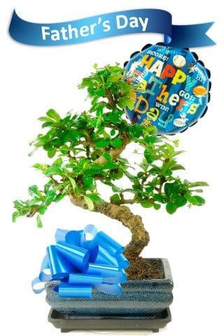 Fathers Day Bonsai Gift