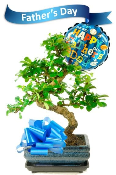 Fathers Day Bonsai Gift