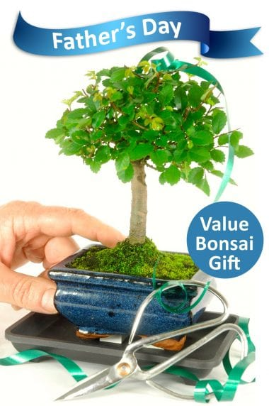 Fathers Day Starter Baby Bonsai Kit