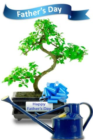 Fathers Day Sweet Plum Bonsai