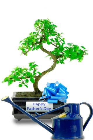 Fathers Day sweet Plum bonsai with watering can
