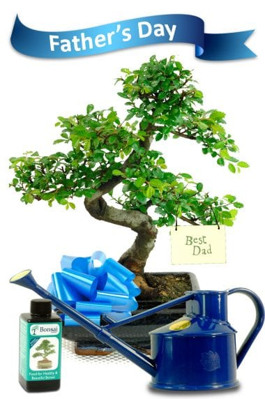 Chinese Elm with Best Dad tag & watering can