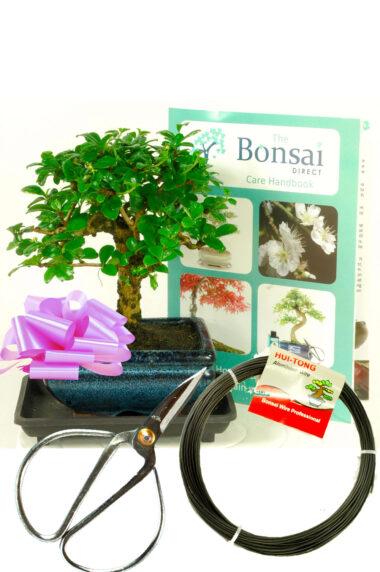 Flowering Baby Bonsai kit - Pruning & Wiring