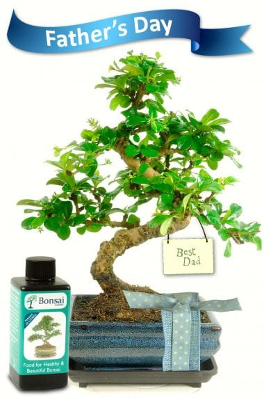 Flowering Fathers Day Bonsai Gift with 'Best Dad' Tag
