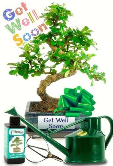 Get Well Soon Bonsai Gift with Watering Can