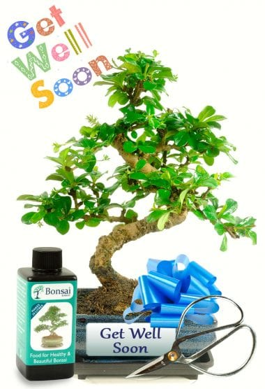 Get Well Soon Exclusive Bonsai Gift