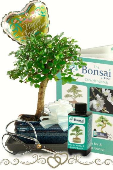 Gorgeous Baby Bonsai Anniversary Gift Set