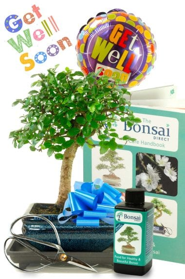 Gorgeous Baby Bonsai Get Well Gift