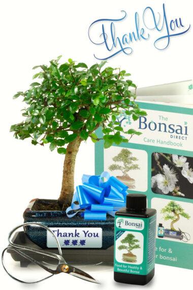 Gorgeous Baby Bonsai Thank You Gift
