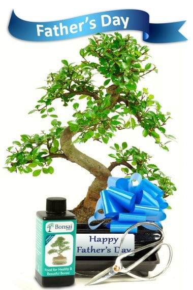 Great Fathers Day Bonsai Gift Set