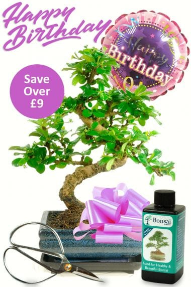 Happy Birthday ~ For Her {Bonsai Gift set 2} (HER2)