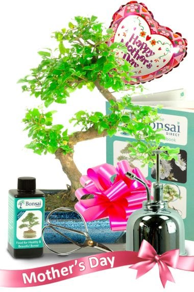Happy Mothers Day Sweet Plum Bonsai Gift in Blue Pot