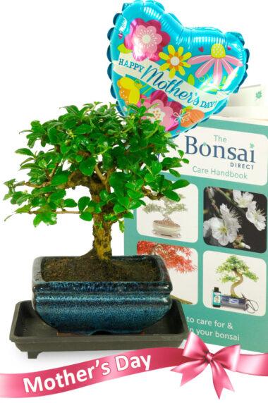 Happy Mothering Sunday Bonsai Gift