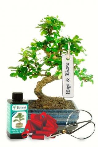 Hugs & Kisses Bonsai Tree Gift