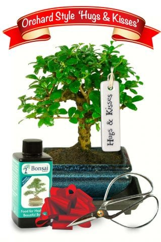 Hugs & Kisses bonsai gift set