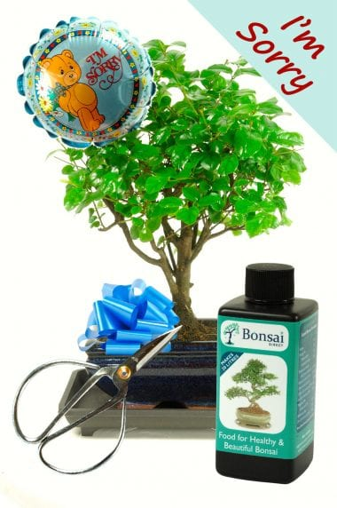 I'm Sorry Baby Bonsai Gift