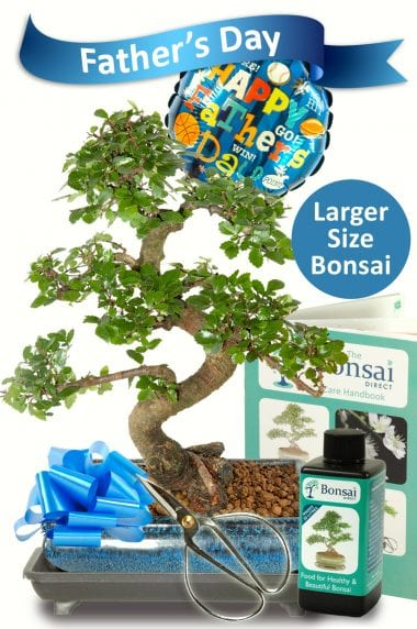 Larger Comprehensive Fathers Day Bonsai Kit