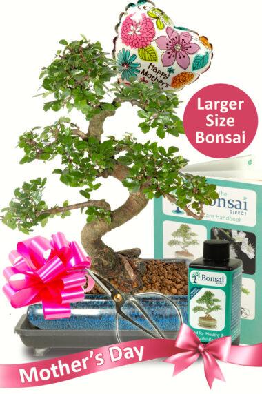 Larger Comprehensive Mothers Day Bonsai Kit