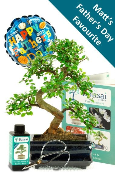 Matts favourite Father's Day bonsai gift