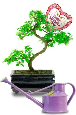 Great value Mothers day bonsai gift set