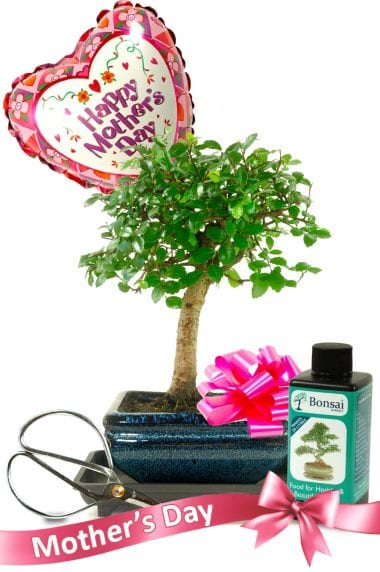 Mother's Day Beginners Baby Bonsai Gift Set