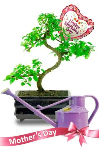 Mothers Day Sweet Plum Indoor Bonsai Gift