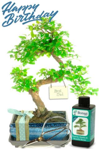 Natural Range 'Best Dad' Bonsai Gift