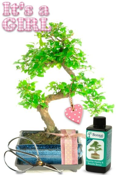 Natural Range Baby Girl Bonsai Gift