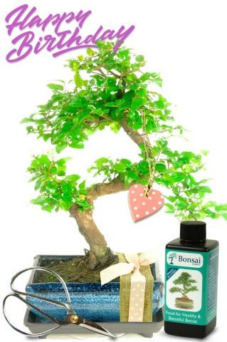 Natural Range Birthday Bonsai Gift - For Her