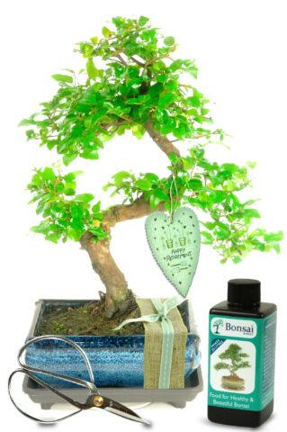 Natural Range Retirement Bonsai Gift