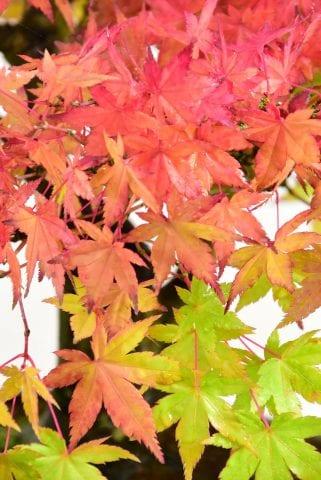 red vibrant green foliage