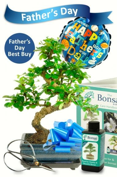 Outstanding Fathers Day Bonsai Gift for sale