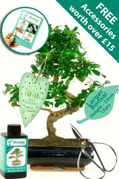Beautiful Flowering Bonsai Retirement Gift with FREE accessories