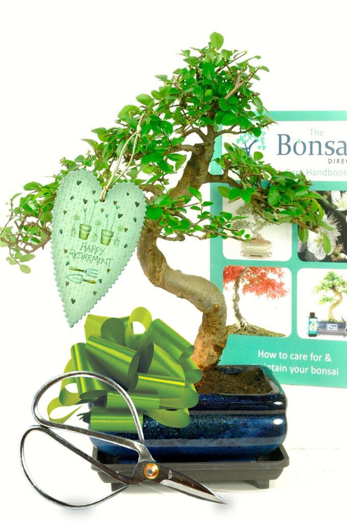 Retirement Bonsai Starter Pack
