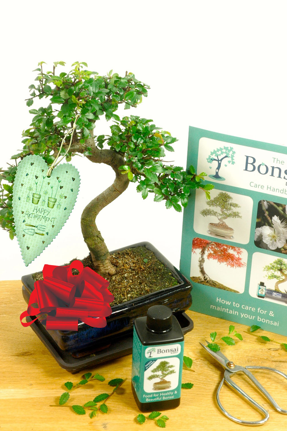 Comprehensive Chinese Elm Indoor Bonsai Retirement Gift Set