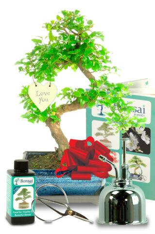 Outstanding Sweet Plum Romantic bonsai tree gift