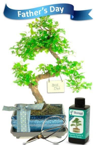 Shabby Chic Best Dad Bonsai Gift
