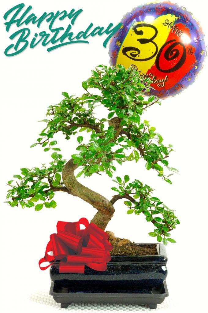 30th birthday bonsai tree gift
