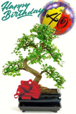 40th birthday bonsai tree gift