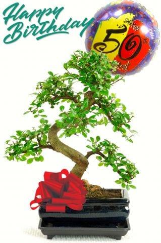 50th birthday bonsai tree gift
