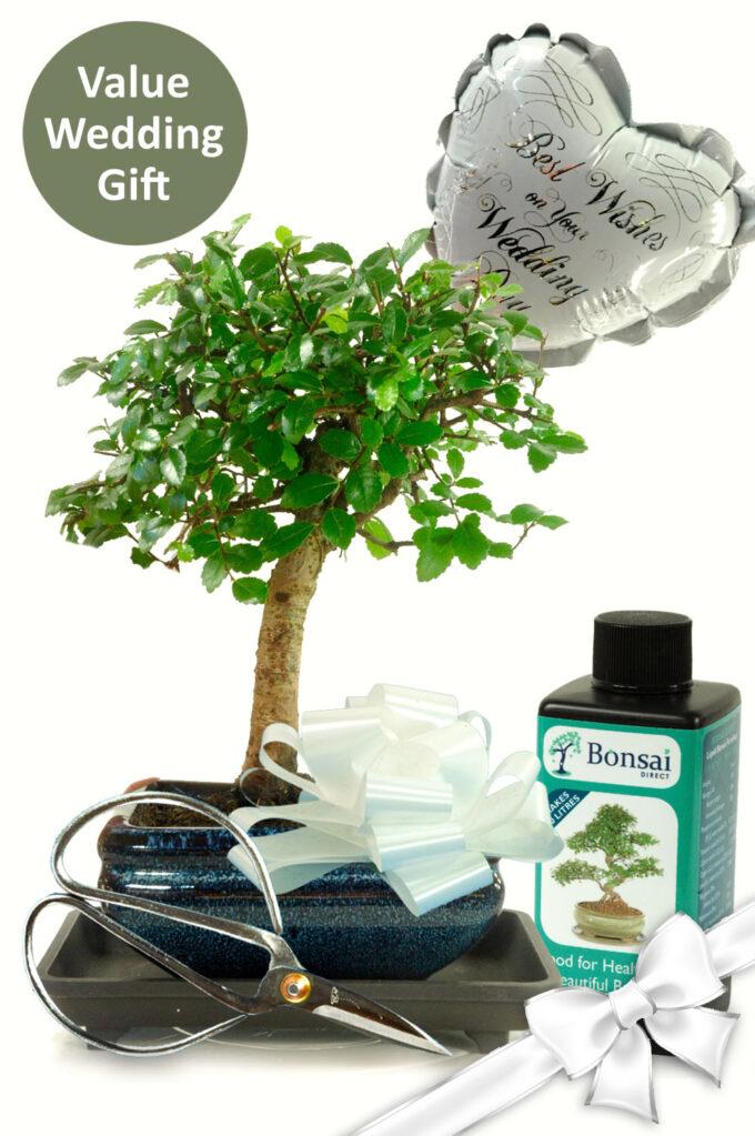 Stunning Baby Bonsai Wedding Gift Set